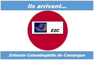Logo E2C V 25 07 2015
